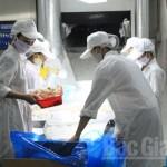 Ứng dụng công nghệ trong bảo quản vải thiều