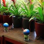 Hà Lan nghiên cứu sản xuất điện từ cây