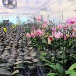 Quảng Ninh tập trung ứng dụng KH-CN trong nông nghiệp