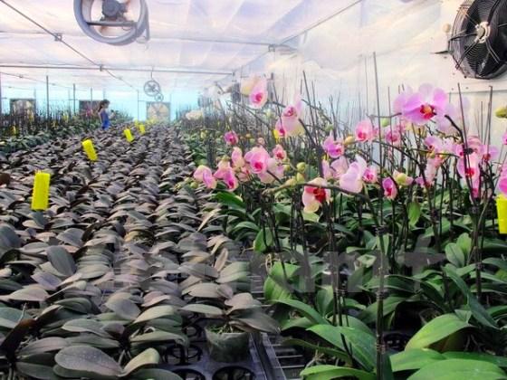 Hoa cong nghe cao - Hoanh Bo - Quang Ninh